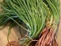 agretto-raccolto-agro-pontino-agrisole
