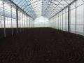 azienda-agricola-agrisole-agro-pontino-5