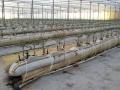 coltura-idroponica-agrisole-3