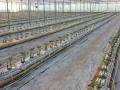 coltura-idroponica-agrisole-4