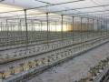 coltura-idroponica-agrisole
