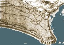 The Pontine Plain