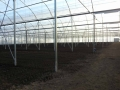 azienda-agricola-agrisole-agro-pontino-6