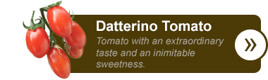 Datterino Tomato