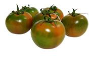 Tomate Tondo Verde